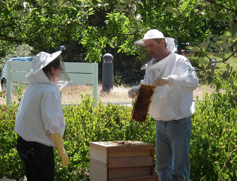 Beekeeper doing a demonstration