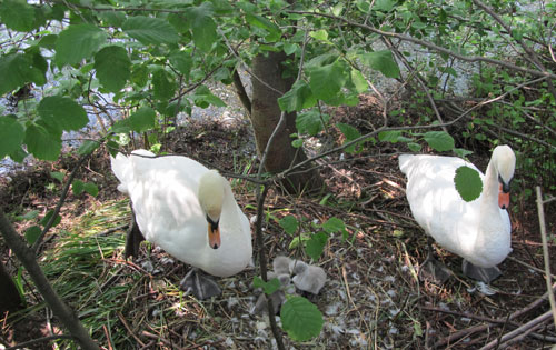 Swan family at The National Archives