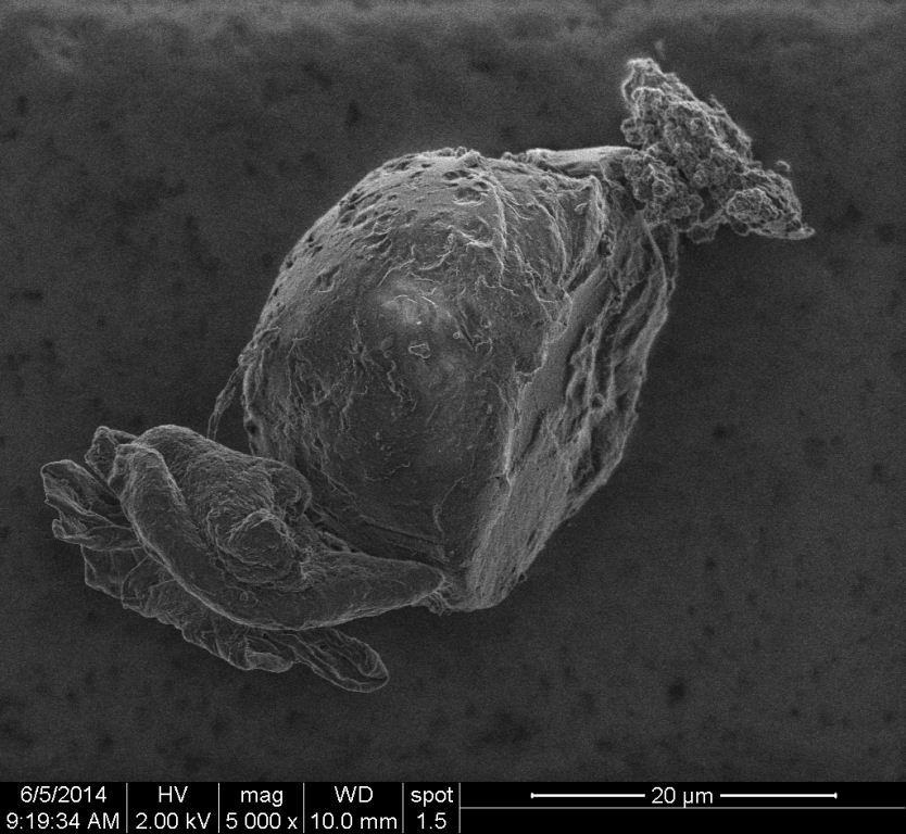 Figure 5. An SEM image of an organic particle primarily composed of carbon and oxygen at 5000 times magnification