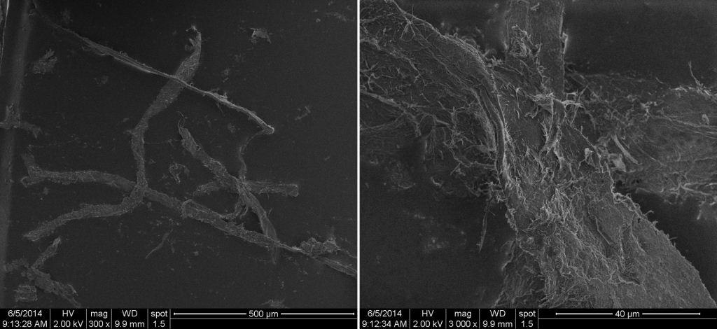 Figure 6. SEM images of plant fibres at 300 (left) and 3000 (right) times magnification.