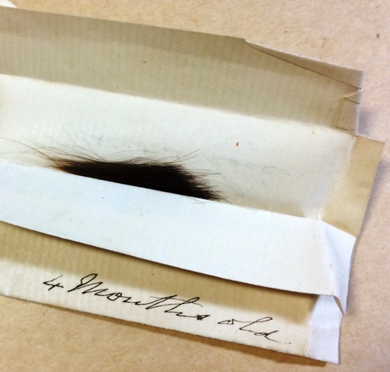 An envelope containing a lock of hair from a child aged four months (reference: PRO 30/89/37/1)