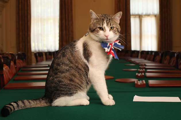 Image of tabby cat Larry, Chief Mouser to the Cabinet Office, wearing a union jack bow