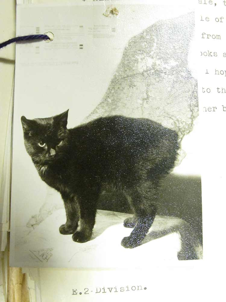 Image of Peta, a black cat