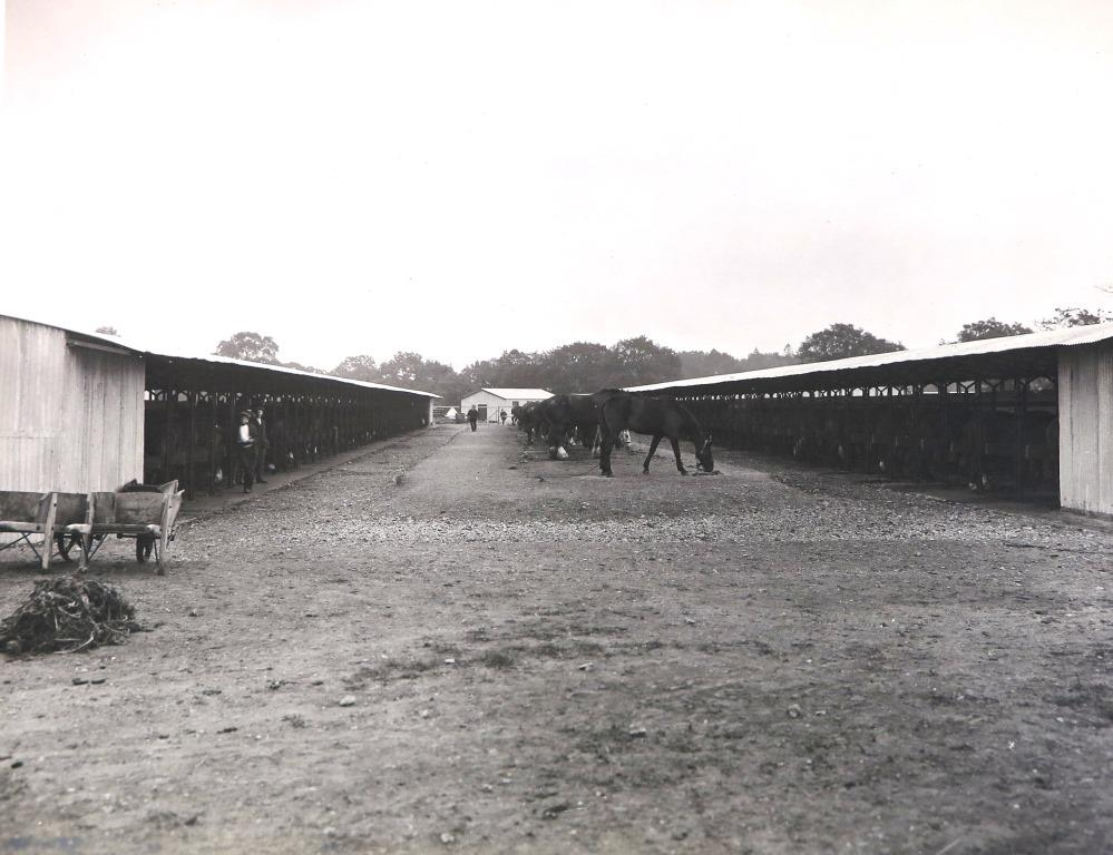 Black and white image open ground; there are stables on either side, with a row of horses between them