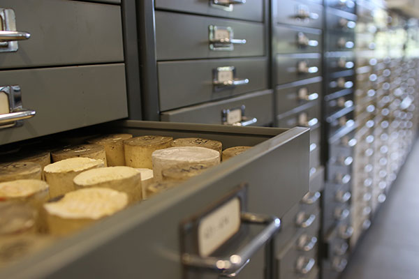 The seal moulds are stored in drawers