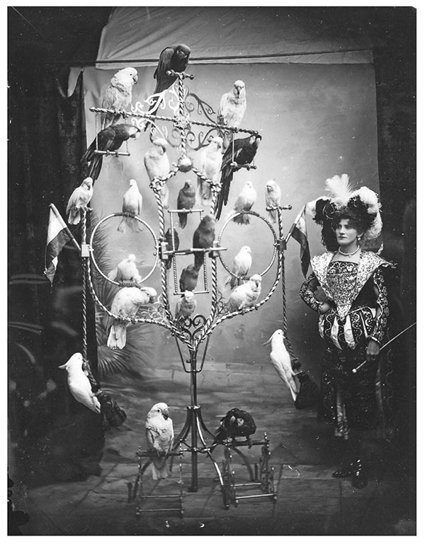Mrs Marzella and her birds, a performer and bird trainer in 1898, catalogue reference COPY 1/438/525