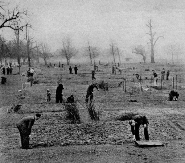 Document Reference : inf 2/1 . Clapham Common used at an allotment, 1939-1945