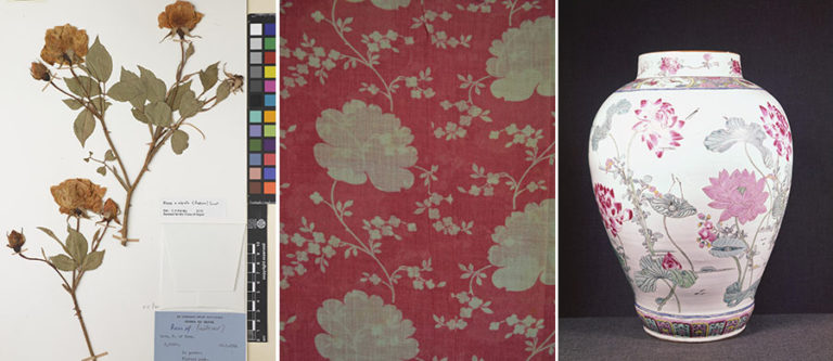 Three images showing patterns, from collections at Kew Gardens, The National Archives, and the Victoria and Albert museum.