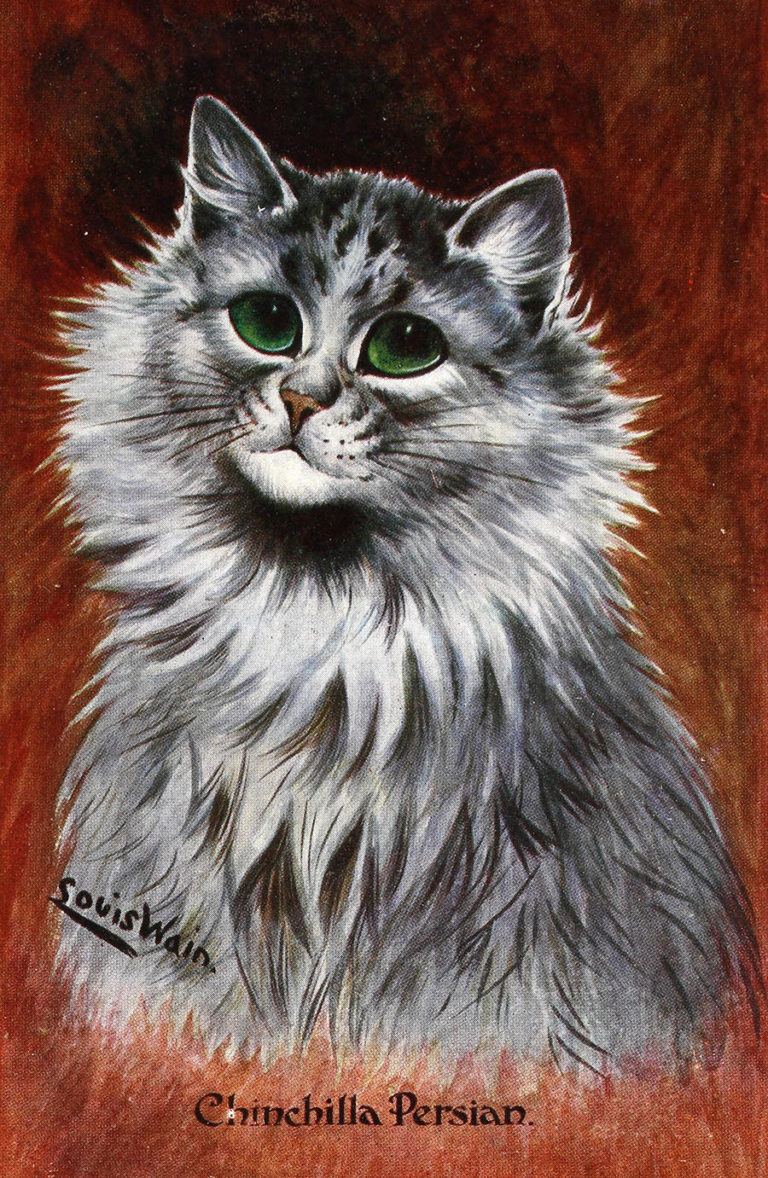 Colour drawing of Chinchilla Persian cat, Louis Wain, 1905.